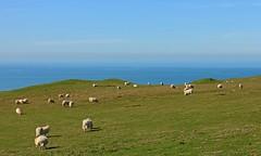 Living Life On The Edge (RoystonVasey) Tags: wales canon happy eos sheep zoom m valley lamb 1855mm stm snowdonia cwm aberdovey aber ewe snp dyfi maethlon