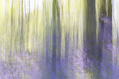 All A Blur (Kathy ~ FineArt-Landscapes) Tags: wood flowers trees abstract colour art nature bluebells forest spring artistic fineart creative motionblur pastels nottinghamshire icm