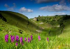 Cressbrook Dale (Peter Quinn1) Tags: derbyshire peakdistrict limestone cressbrookdale whitepeak earlypurpleorchid petersstone