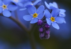 DSC_1145 (PeaTJay) Tags: flowers plants macro nature gardens fauna outdoors reading flora sigma micro closeups berkshire lowerearley nikond750