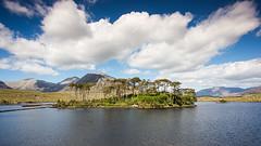Twelve Pines (paulflynn) Tags: trees galway clouds island connemara cloudscapes
