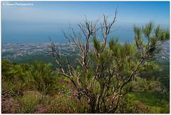 DSC_0351 (tonydg57) Tags: del torre campania napoli vesuvio vulcano pompei ercolano greco