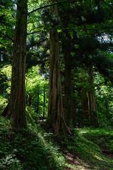 201606014_2822 (Gansan00) Tags: green japan sony  6   nukumi ilce7rm2