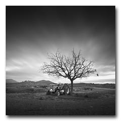 (jose.singla) Tags: sky bw españa white tractor black tree byn blanco monochrome canon landscape luces spain negro sigma paisaje murcia cielo árbol 1020 sombras 50d josesingla joseantoniogimenez