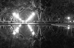 x (eanwe) Tags: light reflection tree water sydney hydepark