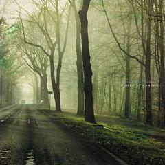 a precious privilege (silviaON) Tags: road street morning trees light mist fog g april textured 2012 memoriesbook bsactions kimklassentextures asquaresuperstarstemple top2012 ftsapril