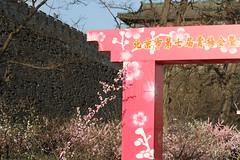 IMG_2335.jpg (dcstrebe) Tags: china asia plumblossomfestival