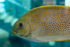 IMG_4004.jpg (kntrty) Tags: fish aquamarine   tropicalfish