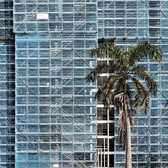 palm view (hsalnat) Tags: abstract architecture construction singapore palmtree sq palmview