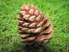 Just a Cone (Al Kerr) Tags: cone just