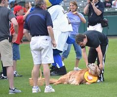 A Little Attention (MTSOfan) Tags: fun community baseball popular aa minorleague batdog waterfrontpark trentonthunder trentonnj
