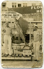 Sailfish Caught on Yacht Skip Jack, Floridian Hotel Dock (Alan Mays) Tags: old fish signs men docks vintage boats captains fishing fishermen florida photos flor ephemera photographs torn fl hotels yachts bent miamibeach lemay foundphotos taped floridian sailfish fishingrods skipjack fishingdocks floridianhotel eplemay
