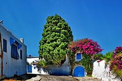 Tunisi - Tunisia (Alviero41) Tags: tunisia sidibousaid fiori tunisi cittàblu alviero41 nikond7000