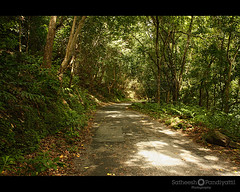 in to the wild (Satish Pandiyattil) Tags: mountain forest kerala highrange bonacaud bonakkad bonacord agasthyahills