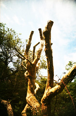 Dead Tree (Saturated Imagery) Tags: tree film 35mm lomo xpro lomography crossprocessed saturated colours toycamera wideangle slidefilm stump trunk uws expiredfilm 22mm vivitarultrawideandslim buslingthorpe epsonv500 sugarwellhill agphotographic scotchchrome8003200