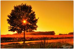 road trip sunset (Dominik Hartmann) Tags: road light sunset summer sky orange sun tree field yellow canon germany landscape deutschland licht ray sommer strasse feld himmel nrw landschaft sonne baum hdr sauerland strahlen 550d