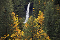 A Splash Of Gold (Ian Sane) Tags: park autumn trees green fall nature water colors oregon forest silver landscape ian photography gold state north images falls splash sane the sublimity a of