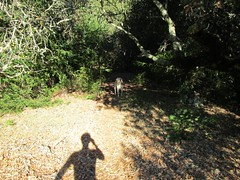 Me and my Shadow (comma?) Tags: california yellowlabrador californiahills morninghike californiaautumn californiamountains mountainhiking