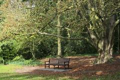 Holland Park (Lucianorss92) Tags: park autumn holland london foglie bench londra panchina