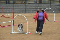 agility237 (jaimekay16) Tags: dog training austin agility k9 xpress nadac k9x