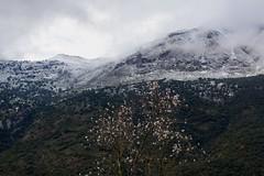 Spring Breeze (Jos Rambaud) Tags: winter snow tree clouds landscape arbol cloudy snowy nieve paisaje snowcapped nubes invierno malaga almendros almondtree serraniaderonda sierradelibar