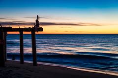 Ocean Grove Pier (artkeh) Tags: ocean sky beach colors sunrise coast pier puppet shore oceangrove oceangrovenj