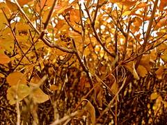 Orange Leaves (K.Okawa) Tags: world life trip school autumn light shadow orange color macro tree art fall nature beauty leaves turkey relax leaf colorful asia europe peace bright earth deep peaceful sunny www lazy simple cappodocia weekwithoutwalls