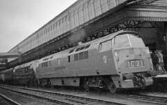 D1000 + D862 Exeter St. David's. Easter 1962 (Brit 70013 fan) Tags: d1000 westernenterprise western d862 viking warship desertsand exeterstdavids 1962 dieselhydraulic 1stgenerationdiesel british railways britishrailways class52 class42 1c21