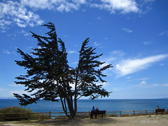 Breathe in This Moment (VenturaMermaid) Tags: ocean blue sky cloud tree beautiful bench photo view outdoor scenic picture rest daytime montereypine