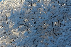 Shadow and Light (ivan_sundby) Tags: snow wintertrees snowybranches
