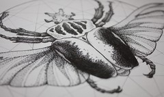Dotwork Goliath Beetle (ShinyFabulousDarling) Tags: art geometric tattoo illustration artwork beetle entomology tattoodesign goliathbeetle tattooinspired scienticillustation