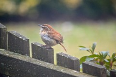 ~Little bird~