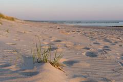 TH20160507A608564 (fotografie-heinrich) Tags: strand spuren ostsee dne zingst strandhafer stdteortschaften