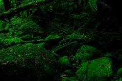 Yakushima #1 (k_t) Tags: green forest cedar yakushima mossy yaku