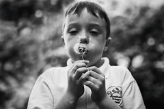 Make a wish! (markfly1) Tags: boy white black field 50mm nikon focus child blowing dandelion seeds d750 shallow depth clocks