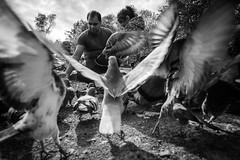 Feeding the Pigeons (Philip Gillespie) Tags: family child man father daughter girl birds pigeons park gardens mono black white action moment story flight trees water contrast movement canon sequent photography 2016 may feathers feed feeding animal