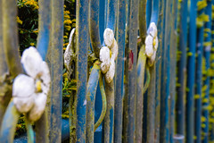 Rusty gate (Maria Eklind) Tags: park city flowers summer flower green colors leaves se spring europe sweden outdoor sverige malm pildammsparken skneln