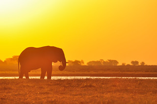 Another Silhouette, Chobe National Park, Botswana