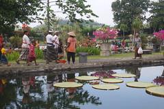 Tirta Gangga (sandorson) Tags: bali indonesia karangasem tirtagangga indonzia