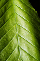 Pentax K-1 Macro Tests, A walk through the garden and woods with the Pentax-FA 50mm f/2.8 macro (B. Gohacki) Tags: plants macro closeup digital forest leaf pentax flash dslr ricoh strobe k1 50mmf28 smcpentaxfa