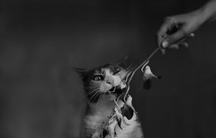 Frida (Stefano-Bosso) Tags: bw italy flower love monochrome animals cat canon mono monocromo blackwhite italian noiretblanc frida gatto bnw biancoenero blackwhitephotos stefanobosso