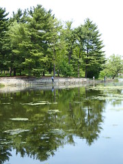 Wheaton, IL, Herrick Lake Forest Preserve, Pine Trees Reflected (Mary Warren (6.9+ Million Views)) Tags: trees plants lake reflection green nature pond flora fishermen foliage evergreens pinetrees wheatonil herricklakeforestpreserve