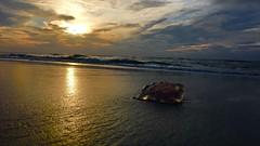 (annijovi) Tags: blue sunset sea sky sun art classic beach nature water night clouds contrast jellyfish