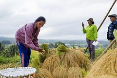 sawah 14 (Fakhri Anindita) Tags: bali nature field indonesia landscape photography nikon farm ubud sawah jatiluwih