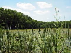 Water Lily Pond (BunnyHugger) Tags: pond flooding waterlily letterboxing greenville belding snakeyrun flatriverstategamearea