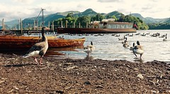 Birds Eye View (Nige H (Thanks for 5m views)) Tags: lake mountains nature birds animals landscape boats geese lakedistrict cumbria derwentwater keswick catbells