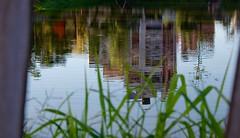 IMG_9561 (dishachatterjee) Tags: india reflections earlymorning ponds kolkata waterbodies westbengal