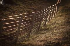 Field Fence (Hkan Dahlstrm) Tags: field fence photography se skne sweden uncropped skanr 2016 f32 skneln ef200mmf28lusm canoneos5dmarkii 1640sek skanrmedfalsterbo 21004062016204409