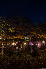 The Tree-Bar (NewOc7) Tags: light festival garden queenstown luma