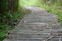 DSC_0055 (jonathanli12) Tags: bridge lake sports nature grass sign basketball pine landscape pond michigan logs peaceful greenery serene shrubs hdr